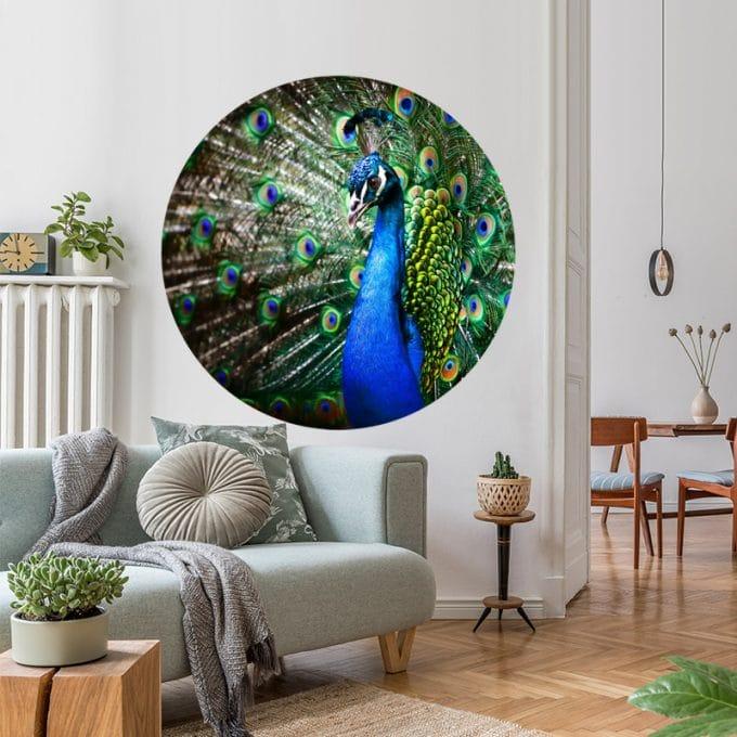 muurcirkel pauw kleurrijk behangcirkel dieren